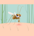 mosquito sucking blood funny pest insect vector image vector image