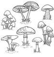 set bright hand drawn mushrooms vector image