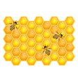 bee on honeycombs isolated on white background vector image