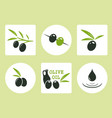 black and green olives with oil olive vector image vector image