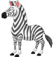 cartoon zebra isolated on white background vector image vector image