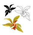 cattleya orchid phalaenopsis cambria isolated vector image