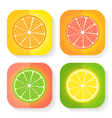 Citrus fruit icons vector image vector image