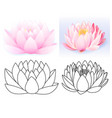 pink lotus pattern flower set vector image vector image