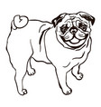 dog breed pug vector image vector image