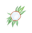 top view on half coconut with milk laying on green vector image vector image