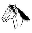 Beautiful horse portrait vector image