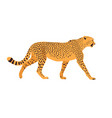 cheetah standing in front white background vector image vector image