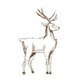 Christmas deer animal antler engraving style vector image