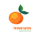 fresh mandarin isolated on white background vector image vector image