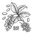 graphic barberry set vector image vector image