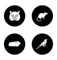 pets glyph icons set vector image