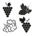 set of abstract grapes icons vector image