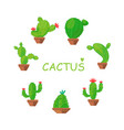 set of home plants - cacti in pots vector image