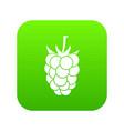 blackberry fruit icon digital green vector image vector image