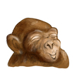 chimpanzee with smiley face vector image vector image