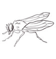 fly drawing on white background vector image vector image