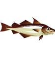 haddock vector image vector image