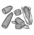 vintage sketch corn cob with grains maize vector image vector image
