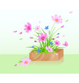 wooden box with red cosmos flowers vector image vector image