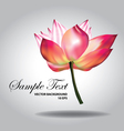 Beautiful pink lotus vector image