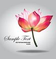 beautiful pink lotus vector image vector image