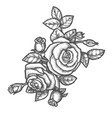 hand drawn rose flower with leavessketch plant vector image vector image