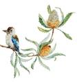 Australian kookaburra bird vector image vector image