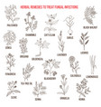 best herbal remedies for fungal infections vector image vector image