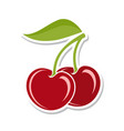 cherry sweet fruit isolated berries on white vector image