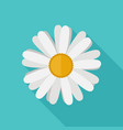 daisy flower flat icon vector image