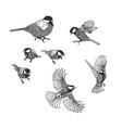 tit sketch birds set design elements vector image