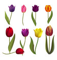 tulips nature spring flower beautiful bouquet vector image vector image