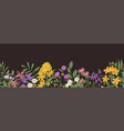 wild flower border botanical banner with field vector image