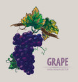 digital detailed color grape hand drawn vector image vector image