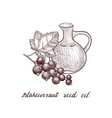 drawing blackcurrant seed oil vector image