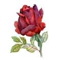 Watercolor garden blooming red roses