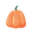 colorful pumpkin over white background vector image vector image