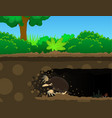 mole dig cartoon vector image