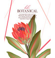 macro wild protea flower exotic tropical african vector image vector image