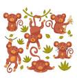 baby monkey child character mascot vector image