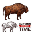 hunting time sketch poster with buffalo vector image