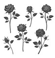 rose buds silhouettes flowers design vector image