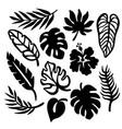 tropic leaves monochrome contours vector image