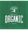 Olive tree vintage logo concept isolated