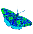 butterfly color vector image vector image