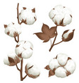 cotton plant boll realistic set vector image
