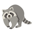 cute smiling raccoon cartoon vector image