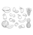 fruit isolated sketch set for food juice design vector image