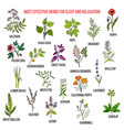 best herbal remedies for sleep and relaxation vector image vector image